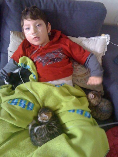 2012 avec les bébés chats